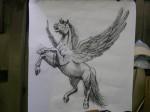 Cavallo 1.JPG